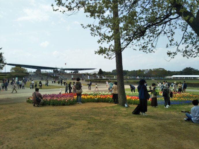 年間を通して花を楽しめる国営ひたち海浜公園